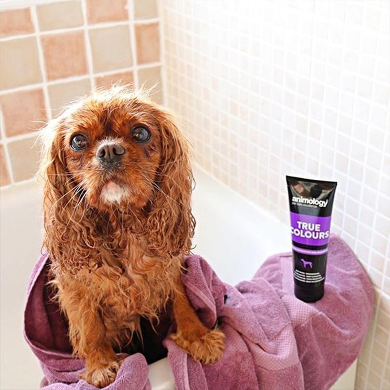 Animology True Colors Renk Koruyucu Köpek Şampuanı 250 Ml