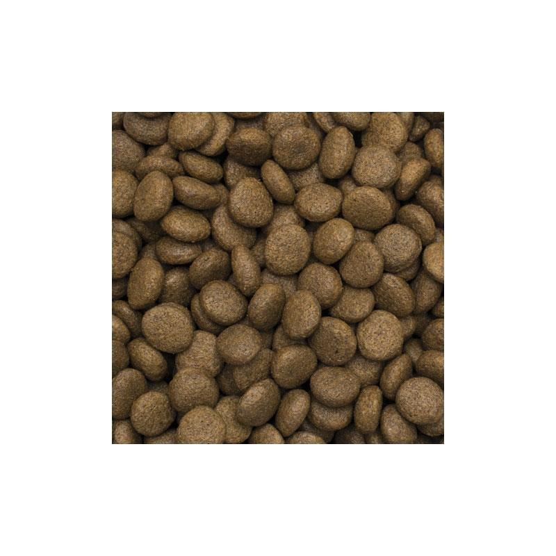 TropiDog Kuzu Etli ve Pirinçli Yetişkin Köpek Maması Medium Large 2,5 kg