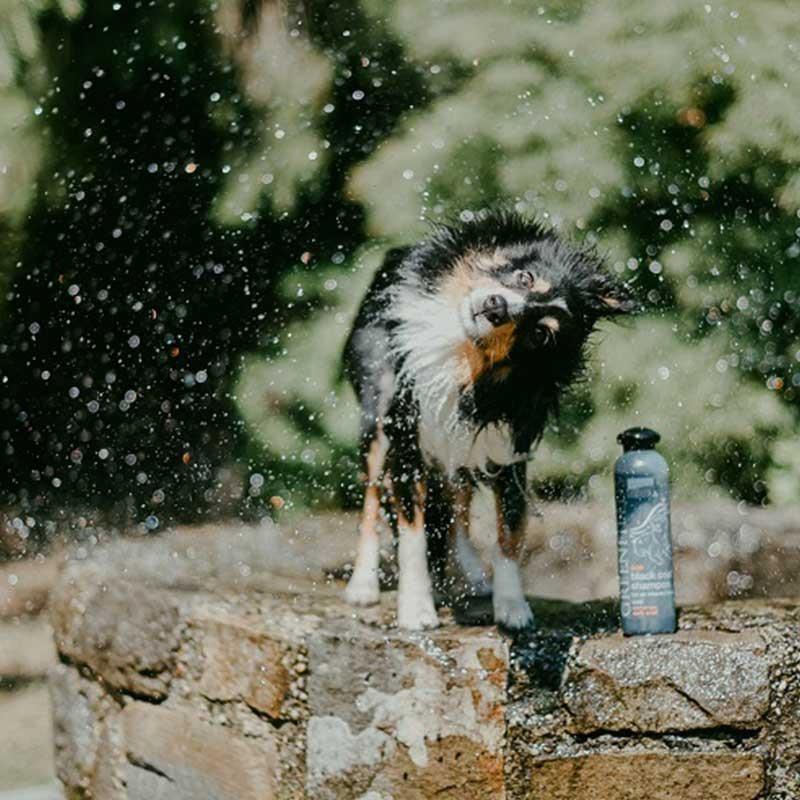 Green Fields Black Coat Siyah Ve Koyu Renk Köpek Şampuanı 250 ml
